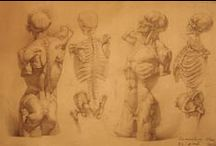 Anatomy / Anatomy drawings