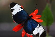 Butterflies / by Erika Del Rosario