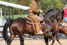 Horseback Riding Tips / Riding tips from leaders in the equine industry.