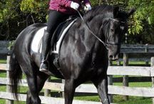 Horse Training Tips / Training tips from leaders in the equine industry.