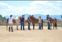 LeadChange: Leadership & Team Building / LeadChange program provides businesses and corporations the opportunity to work directly with our breath-taking CHR horses. All exercises take place on the ground and are specifically designed to promote communication, problem-solving skills, innovation, and as a result increase performance.  Each session is individually tailored to achieve your company's specific objectives.  Come experience the beauty of the CHR Ranch and see the business impact that LeadChange can make for your organization.