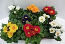 Pflanzen rund ums Haus / Inspirationen für leuchtend schöne Gärten, Balkone und Terrassen.