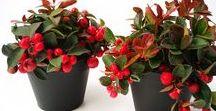 Pflanzen im Herbst / winterharte Pflanzen für die graue Jahreszeit! Plants for the autom