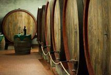 """Fattoria del Teso Vineyards / """"Fattoria del Teso"""" Vineyards pictures for Lucca Wine Treasures"""