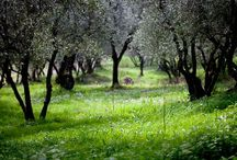 """Fubbiano Vineyards / """"Fubbiano"""" Vineyards pictures for Lucca Wine Treasures"""