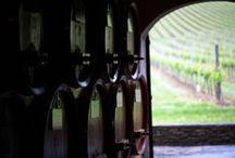 "Montrasio Vineyards / ""Montrasio"" Vineyards pictures for Lucca Wine Treasures"