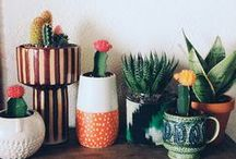 Jardin // Plantes
