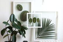 Gerahmtes Grün ♥ dhal / Grün macht glücklich, Pflanzen machen froh! Wieso müssen in die schönsten Bilderrahmen eigentlich immer Bilder, Fotos oder Drucke? Wieso nicht einfach tolle Blätter oder Blüten? Hier seht ihr unsere Inspirationen zu dieser Idee.
