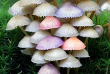 Mushrooms / by Mike Belliveau