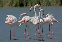 Doñana marshes / The most important area in the Iberian Peninsula for Birdwatching