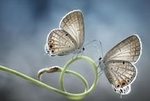 Simple  Beau Naturel / et c'est tout... retrouvons la beauté du simple et du naturel