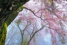 Observes les arbres.... / arbre de vie, racines profondes, feuillage abondant... la beauté d'un arbre...