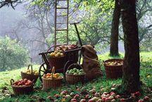 Country farm... / ... Loin des bruits de la ville...