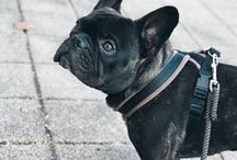 Bulldogs / Who doesn't love french bulldogs?  Here's some pictures from these little friends!