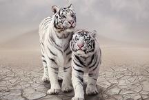 Animals / by Sarah Demlow