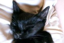 CAT LUV / #cats #cats #cats
