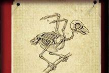 Bones : Skulls