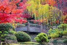 Garten / Es gibt eine Kraft aus der Ewigkeit und diese Kraft ist grün!             Hildegard von Bingen