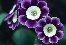 Blumen / Blumen die mir gefallen und meine Eistellungen aus dem eigenen Garten