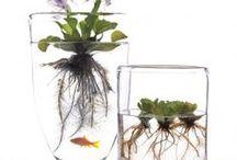 写真(植物)