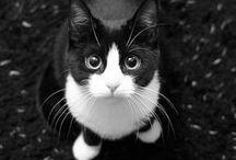 写真(動物)