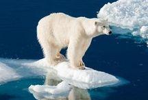 Klimawandel / Um sichtbare Zeichen des Klimawandels