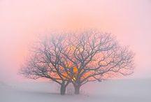 Die Farbe rosa