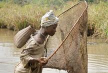 << Fishing * Seafood * Aquaculture >>