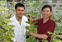 << Plant Science >> / by GR2Food Institute