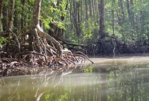 << Climate - Wetlands >> / Wetlands, Floods, Mangroves & Swamps / by GR2Food Institute