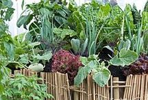 << Edible Landscape >> / food growing in the garden