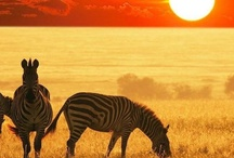 << Climate - Grasslands >> / Grasslands & Savannas / by GR2Food Institute