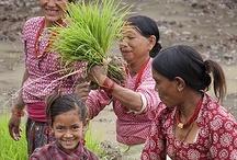 << Women Farming & Fishing >>