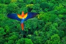 << Climate - Rainforest >>