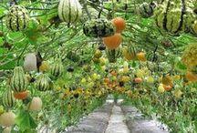 My sweet little garden