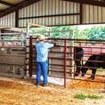 Livestock / With any kind of animal, there is always a better way to take care of them, and enjoy them! Livestock how to. How to own large animals. Owning animals.