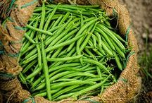 << Beans * Peas * Legumes >>
