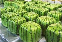 << Melons >>