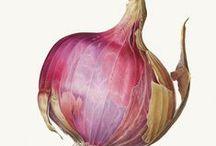 << Onions * Garlic * Chives >>