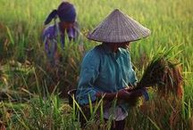 << Food Vietnam >> / Food, farms, and agriculture in Vietnam.