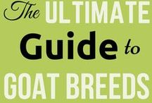 Goat Breeds / There are quite a few goat breeds to choose from. Which one will suit your needs the most? The goats breed you choose will be an answer to your need: goat milk? goat meat? goat companionship? Goat breeds.