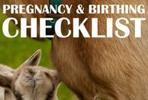 Goats: Breeding, Pregnancy and Kidding / Goat breeding. Goat pregnancy. Goat kidding. Breeding goats is an important part of owning goats, especially if you want the milk! And the baby goats are quite the bonus! So, find out all you can about breeding, pregnancy and kidding!