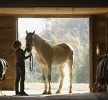 Horse Boarding and Tack Room Ideas / The ins and outs of a horse boarding stables. If you need a place to board your horse or are a horse boarding stables, what do you need to know? Horse boarding. How to board a horse. How to board horses. Horse boarding ideas. How to set up a horse boarding stables. If you have horses, you have tack! Find out how to organize it in the best possible ways! Great ideas! Tack room. Horse tack. How to organize a tack room. Tack room ideas.