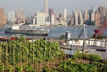 << Food New York City >> / local food in greater New York City