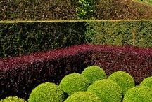 Planting - Hedges & Topiary