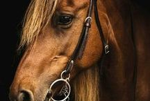 Pretty Horses / Horses are a beautiful creature.  Pretty horses. Pictures of pretty horses. Beautiful horse pictures. Beautiful horses.
