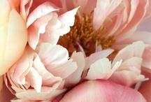 tulipes, pivoines, roses / by Diane