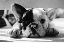 my little love puppy!