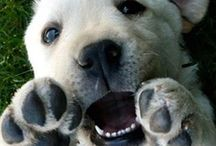 super cute animals!!!!! / super cute and funny images of puppies, dogs and other cute animals