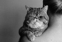 Kittylove♡